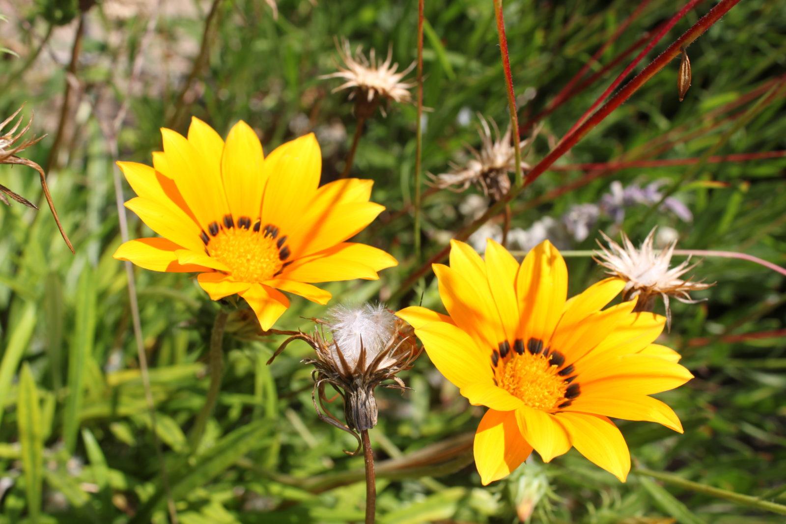 Côte d'Azur Blumen